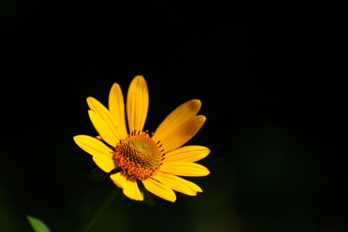 """Yellow Flower"" by Colin Simonson"